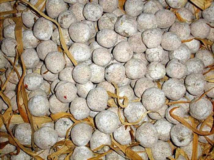 Men lá được sử dụng để nấu rượu ngô